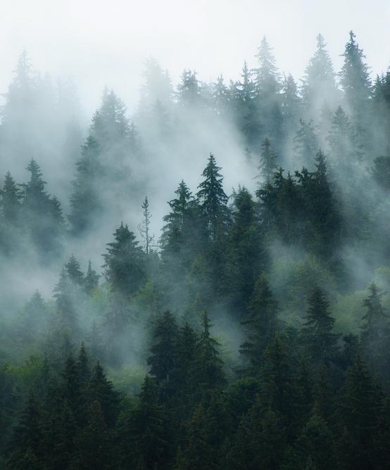 Géomatique appliquée aux ressources naturelles forêts et écosystèmes oasiens et humides